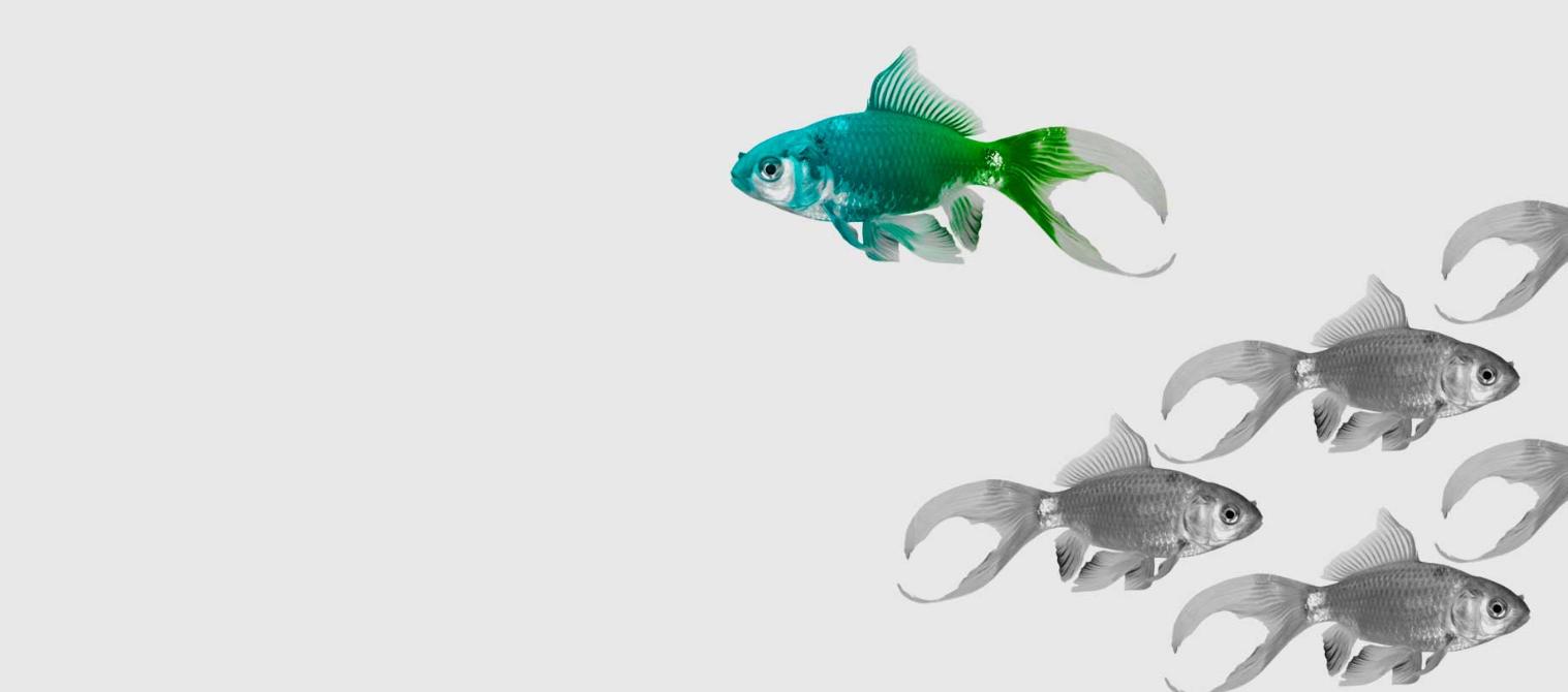 banner_fish_image
